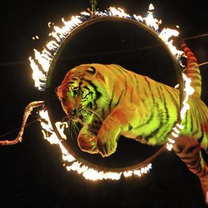 Цирки Ильинского