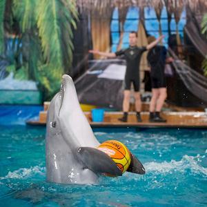 Дельфинарии, океанариумы Ильинского
