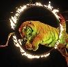 Цирки в Ильинском