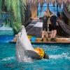Дельфинарии, океанариумы в Ильинском
