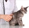 Ветеринарные клиники в Ильинском